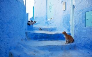 """""""Em Marrocos, uma das cidades mais características, Chefchaouen."""""""