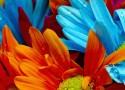 Vasos que fazem inveja às flores  Vasos que fazem inveja às flores capadecorflores 125x90
