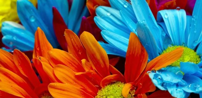 Vasos que fazem inveja às flores