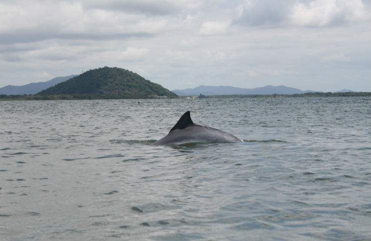 """""""Baia dos Golfinhos, uma praia adorada por todos, até por estes seres mágicos.""""  Lifestyle: 10 melhores praias do Brasil baia dos golfinhos1"""