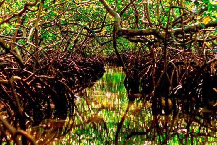 """""""Floresta do Mangue no Brasil foi inspiração de Guilherme Torres.""""  Guilherme Torres colabora com Swarovski para Design Miami 2013 MiamiMangueGroove"""