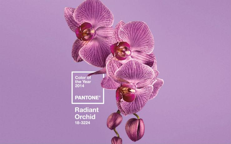 """""""Cor Pantone 2014""""  Moda: modelos para uma passagem de ano Pantone colorpantone"""